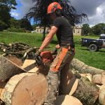 What do we do in the summer? Treeworks Fife!