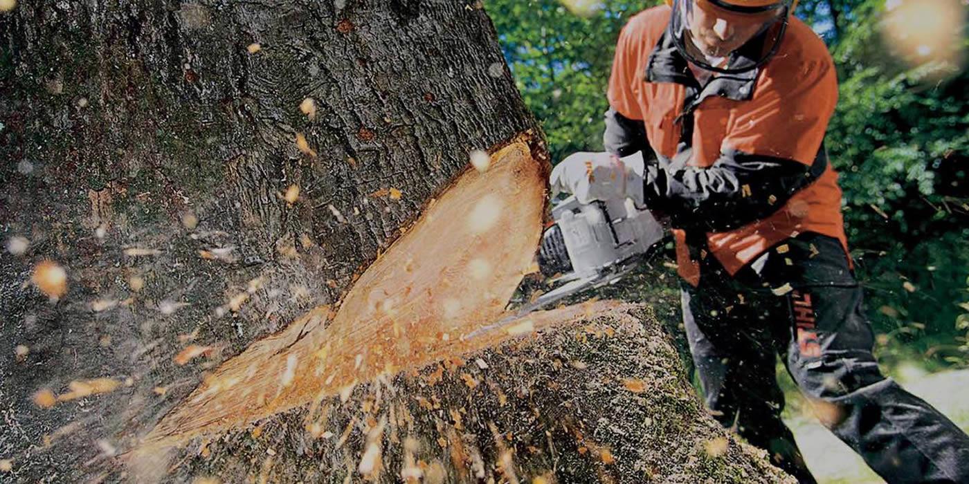 Tree Surgery - Treeworks Fife