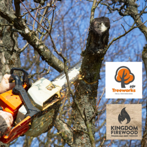 Tree surgery services from our other branch!